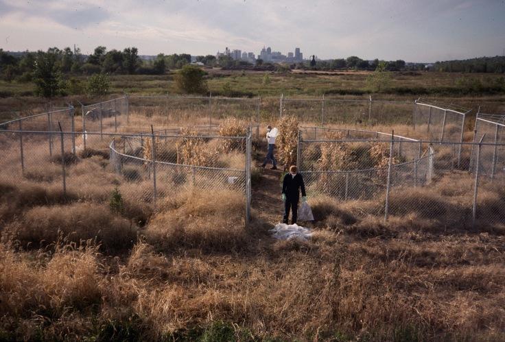Revival Field, Harvest Photo curtesy of Mel Chin