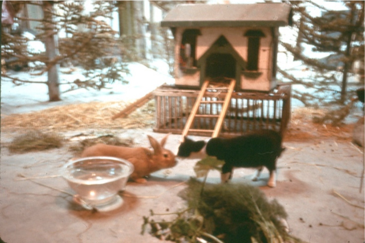 Scene from The Raw Egg Animal Theater (TREAT) at Crossroads Community (the farm) - Buck Meeting Cat © 1976 Bonnie Ora Sherk