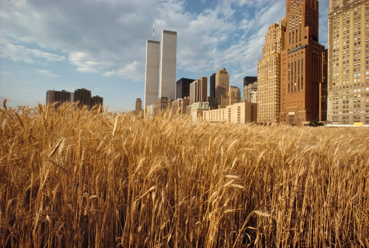 Wheatfield - A Confrontation: Battery Park Landfill, Downtown Manhattan ©1982 Agnes Denes, Courtesy of Leslie Tonkonow Artworks + Projects, New York - View with New York Financial Center