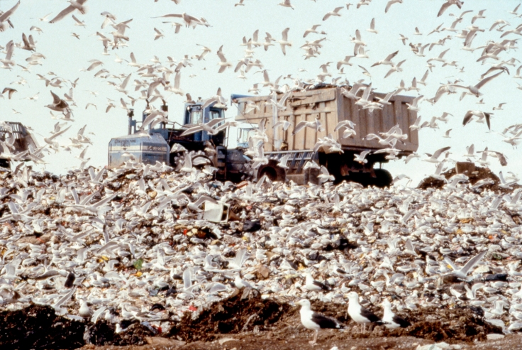 Mierle Laderman Ukeles, Freshkills Landfill, 2001 Staten Island, New York Courtesy of Ronald Feldman Fine Arts, New York